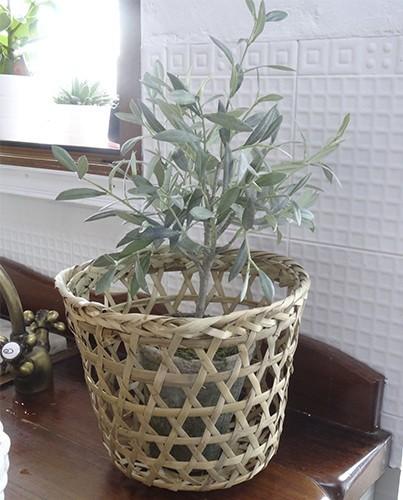 Tierra para olivo en maceta casa dise o casa dise o - Olivo en maceta ...