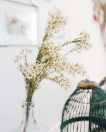 Florecitas campestres