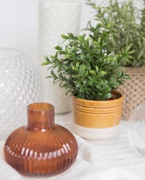 Planta verde ramitas