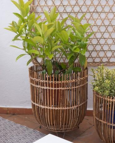Maceta Bambú